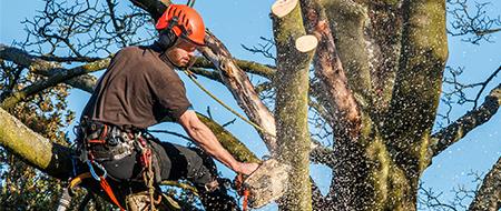 Ciecie oraz wycinka drzew